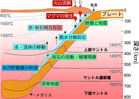 図1 本研究拠点が対象とする「プレート収束域」での現象
